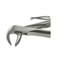 English Extracting Forceps, Lower Universal, 167